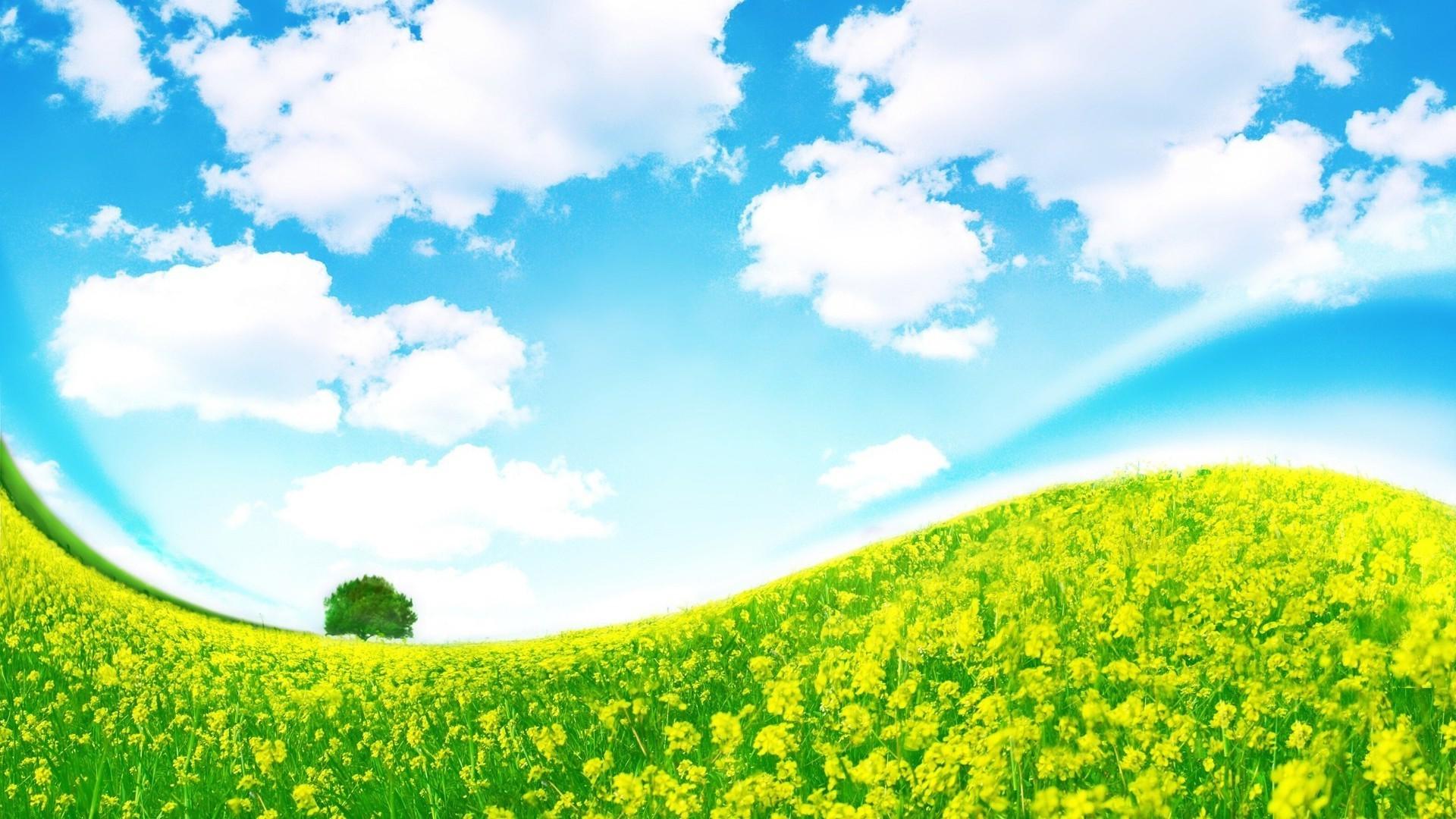 Картинки поле с цветами для детей