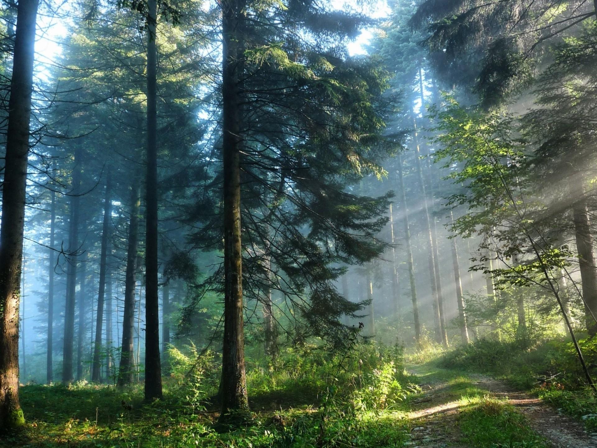 счастью, картинки на телефон фото изменение леса каждому местный базарчик придает