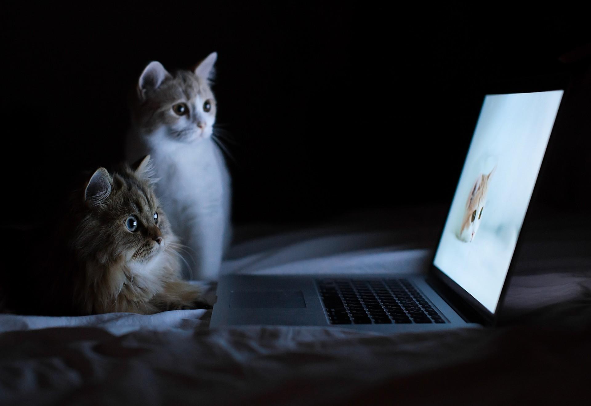 Два кота наблюдают за кошкой на экране ...: million-wallpapers.ru/wallpaper/dva-kota-nablyudayut-za-koshkoj-na...