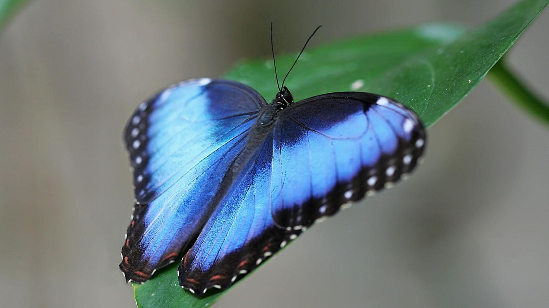 Картинки красивые насекомые, стиле