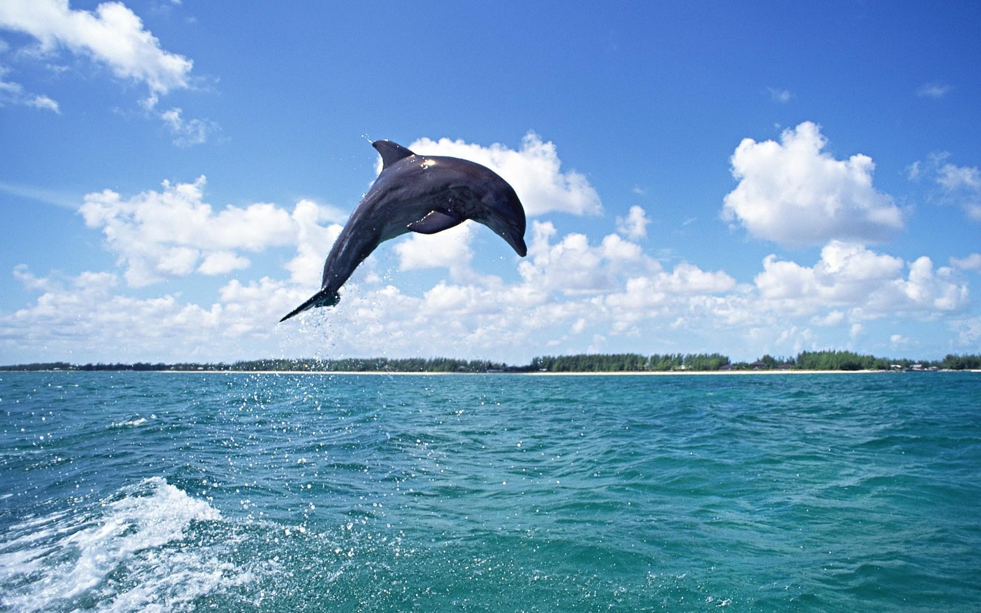 Картинки с дельфином в море