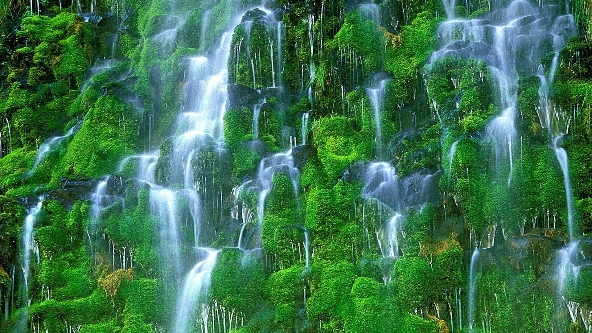 Природа живые картинки которые двигаются