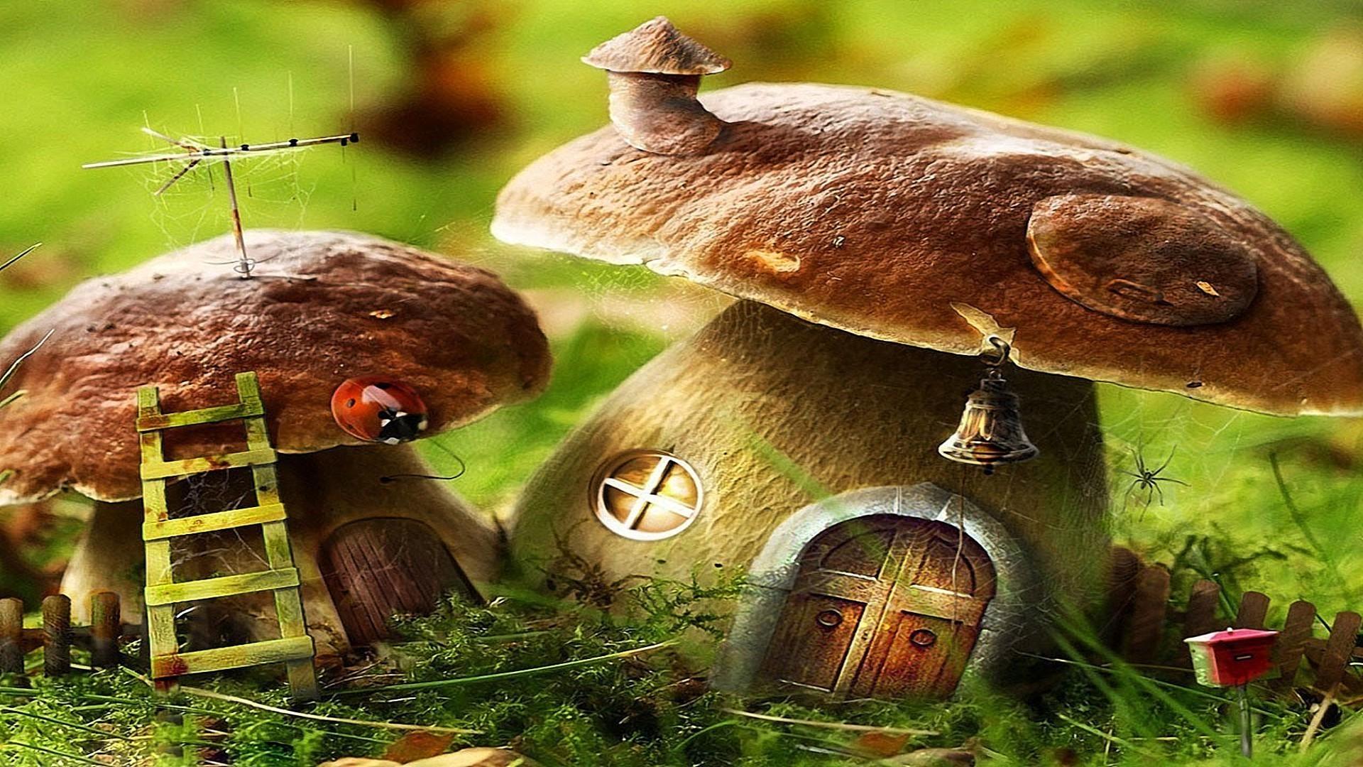 беленькие грибочки загрузить