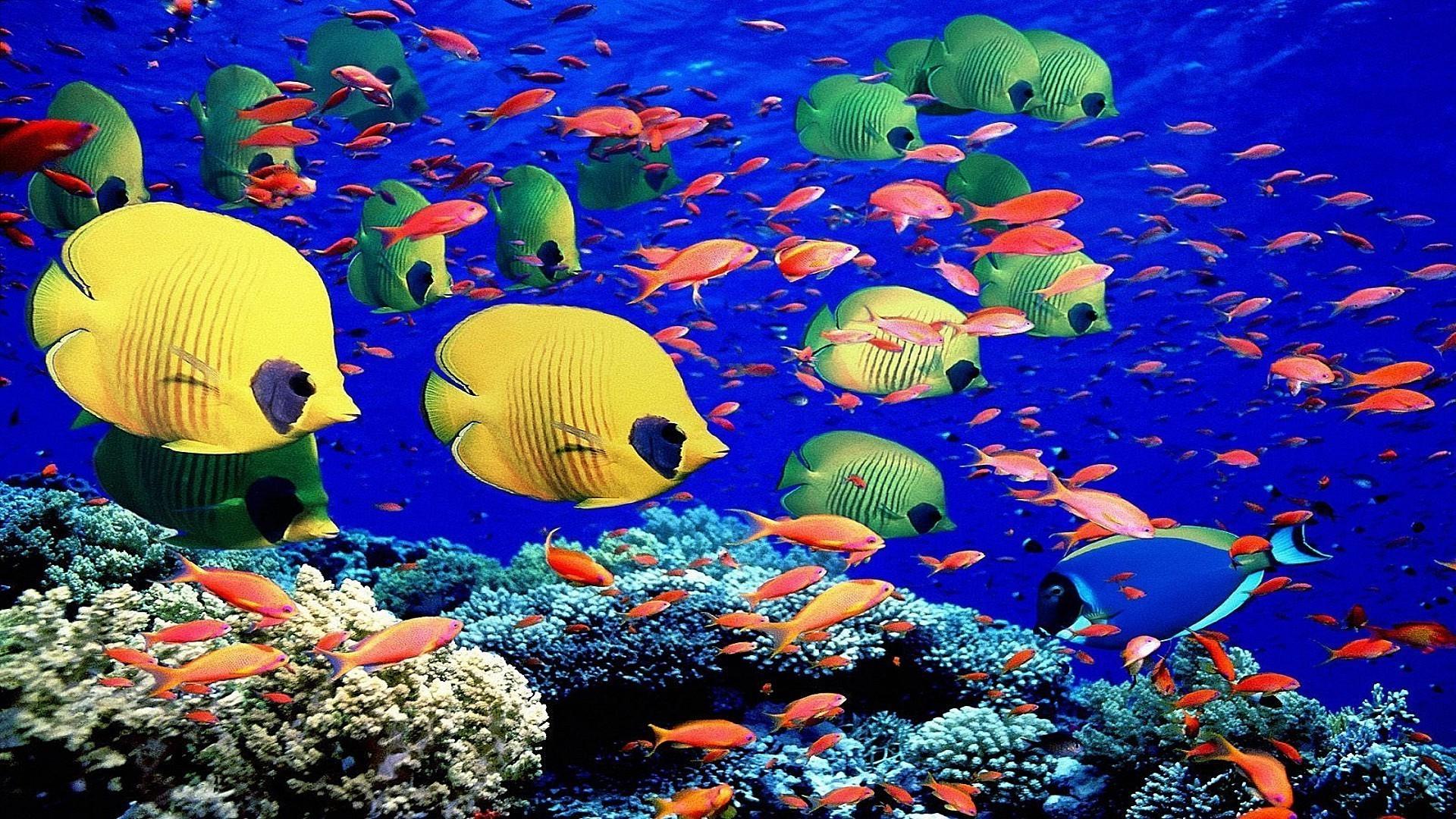 люблю картинки как в реальной жизни выглядит океан с рыбами можете