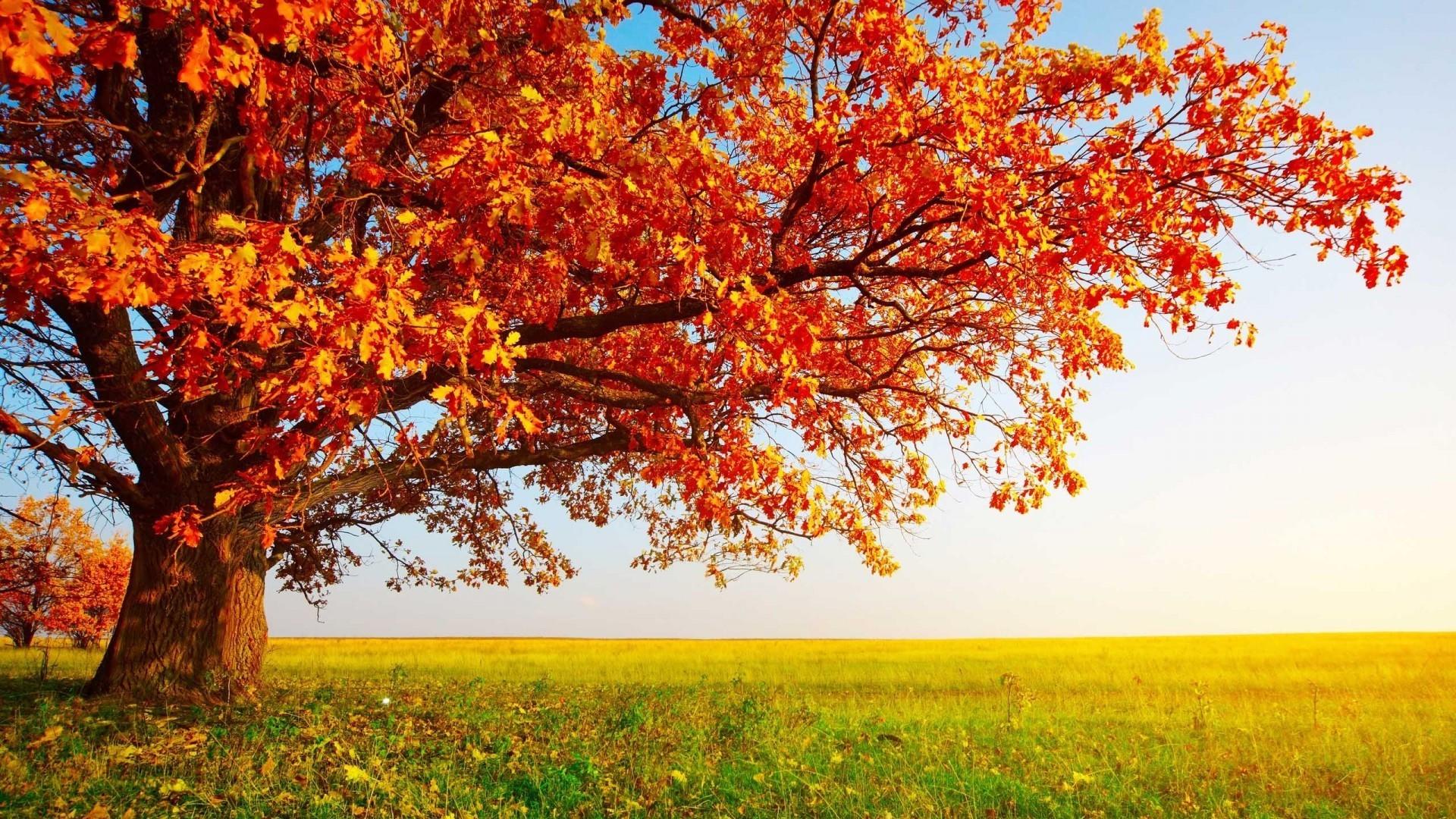 фото природа на рабочий стол осень