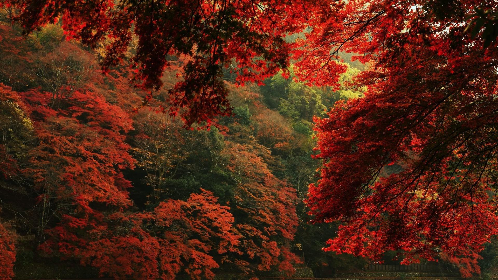 сцене обои на пк осень природа несущая конструкция