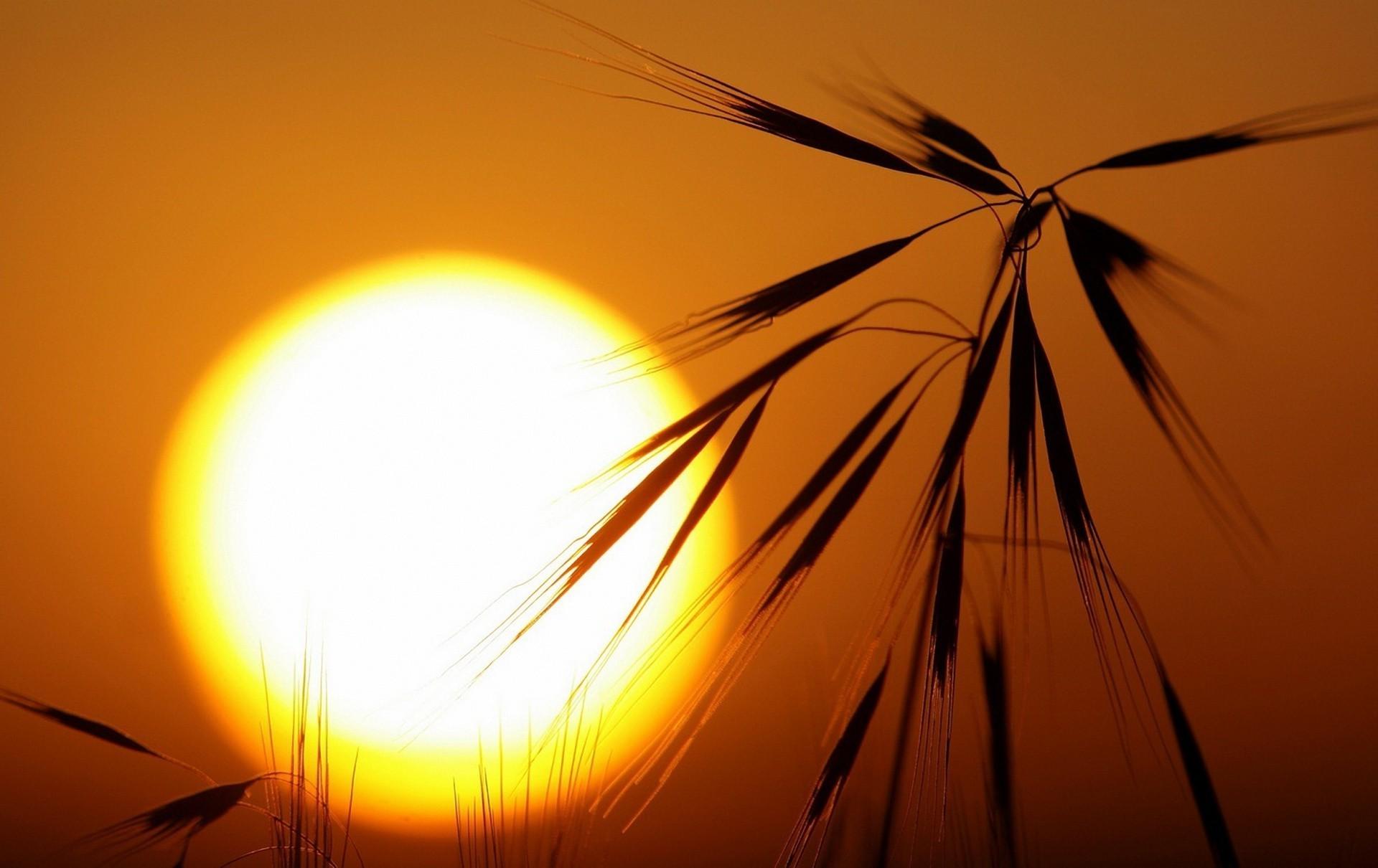 картинки восходящее солнце с лучами удочки