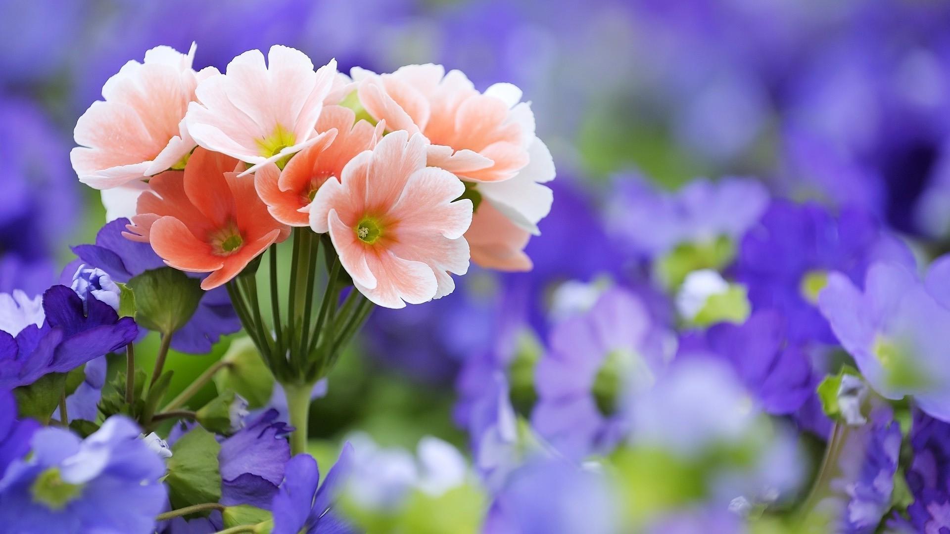 Картинки на рабочий стол цветы справа