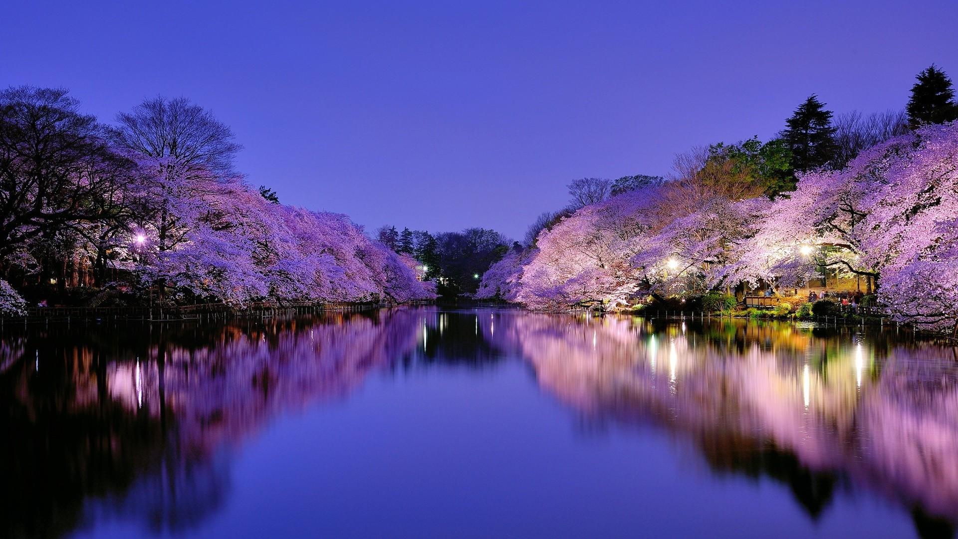 Фото природы ночью