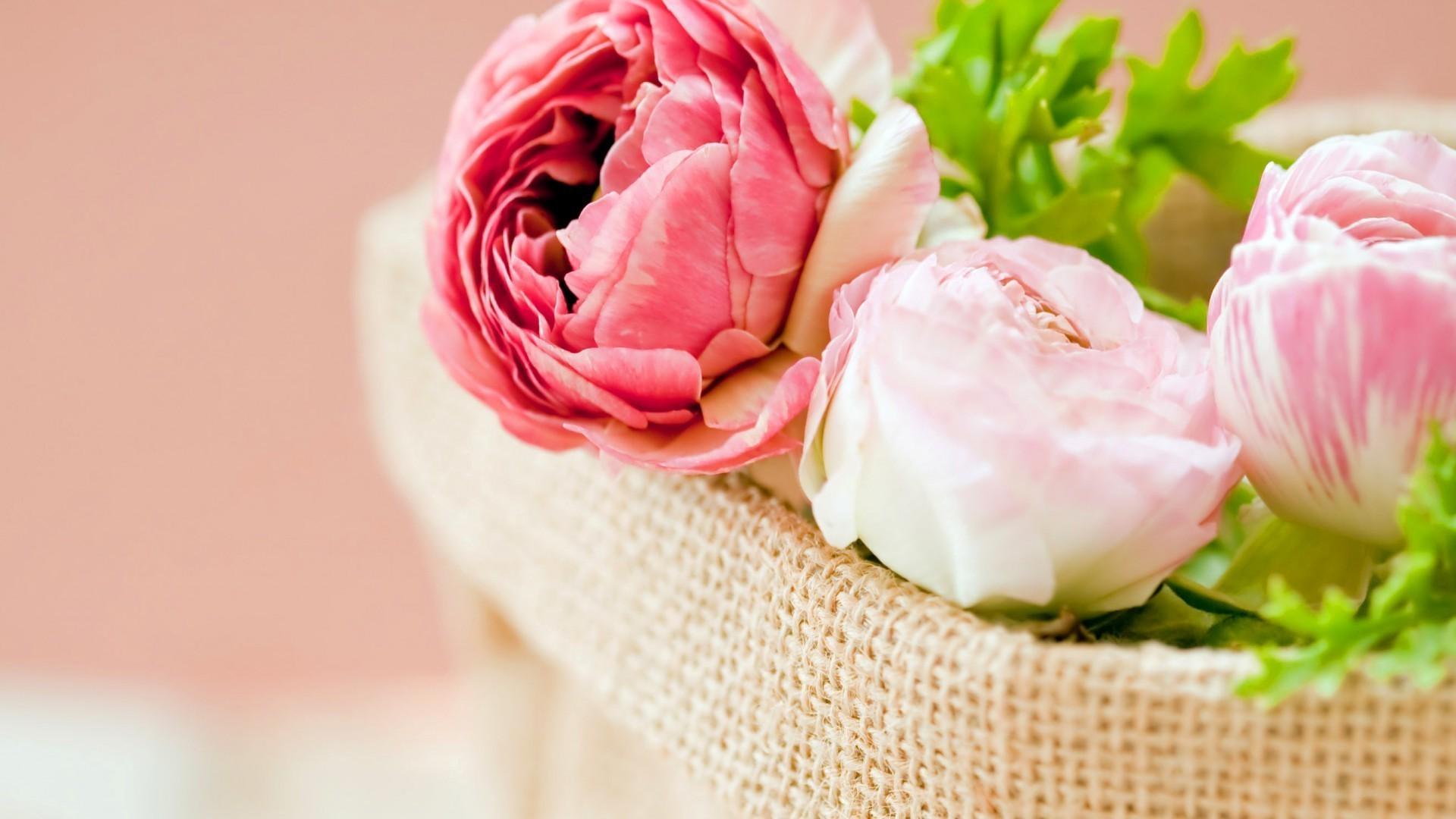 обои для рабочего стола пионы розы № 422795 загрузить