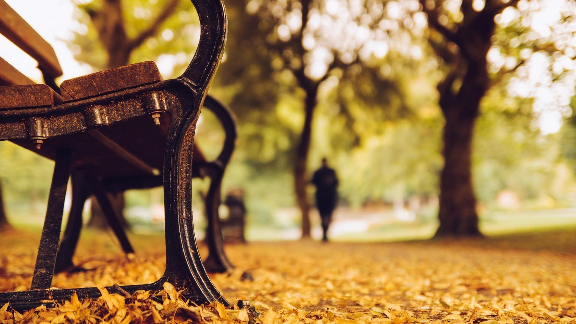 Обои рабочего стола лавочка в парке