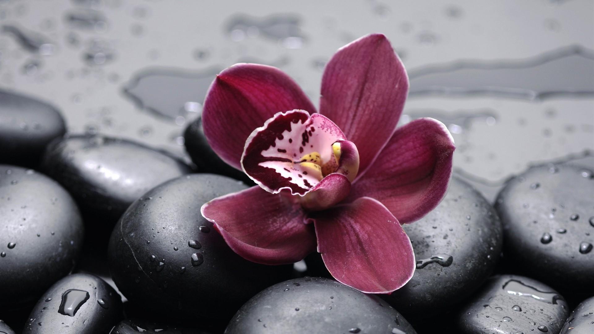 Обои на телефон необычные цветы