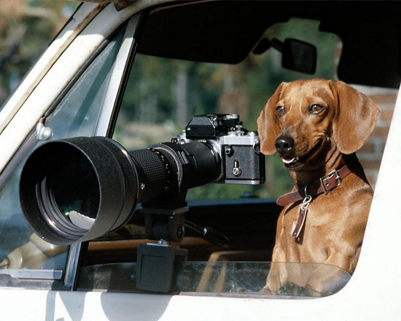 Прикольные картинки фотоаппаратом, открытку