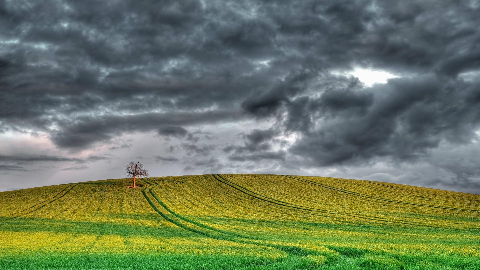 поле природа тучи бесплатно