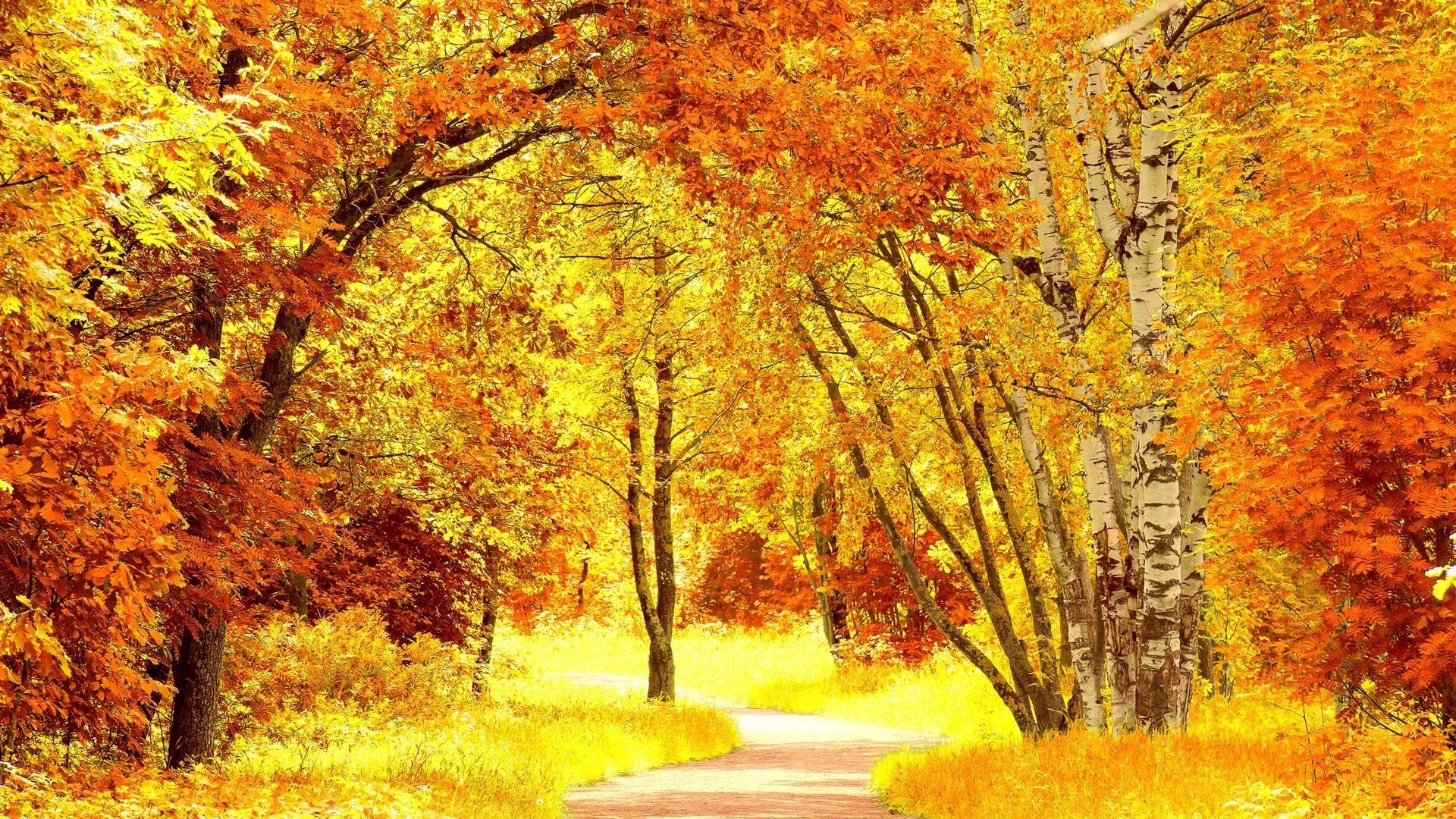 Осень обои на рабочий стол осень золотая на весь экран
