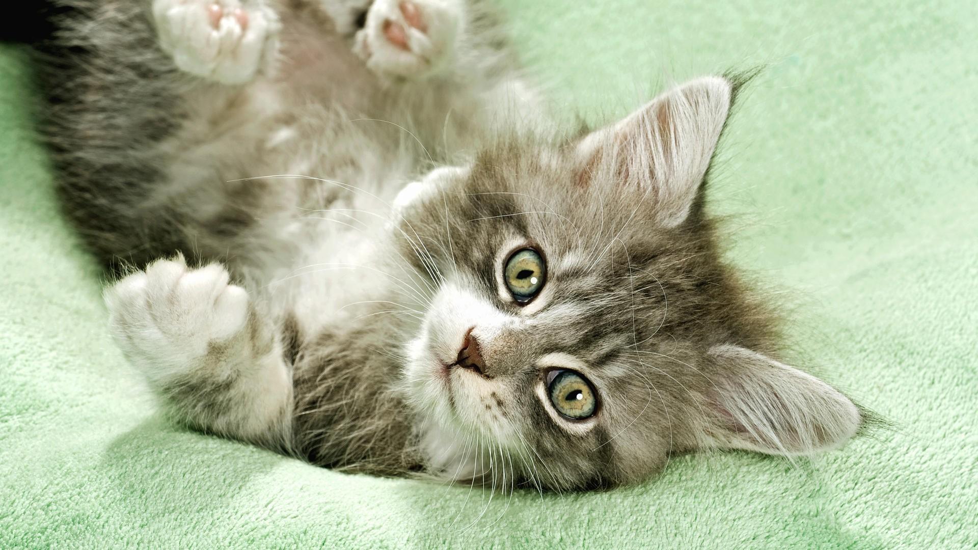 Картинки с кошками котами, для вырезания