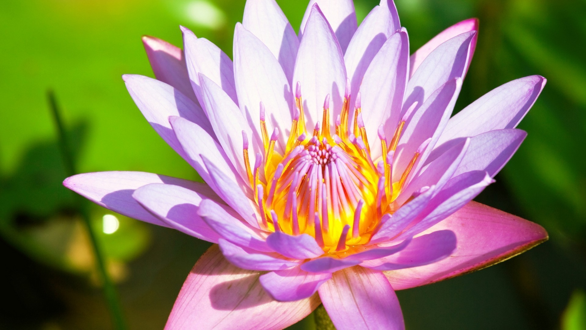 Цветок лотоса открытка, днем рождения