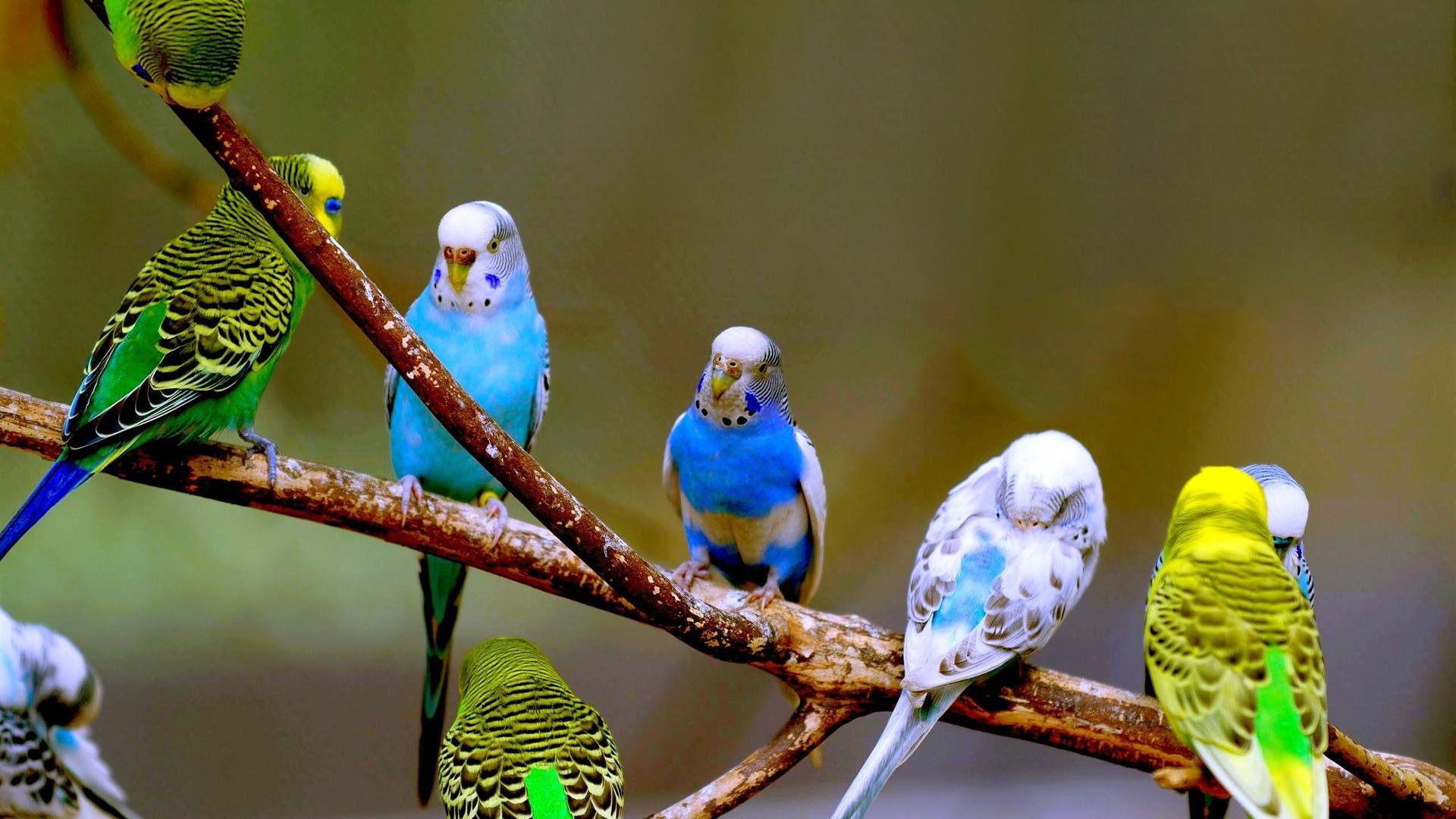 Картинка с попугайчиками, настроение