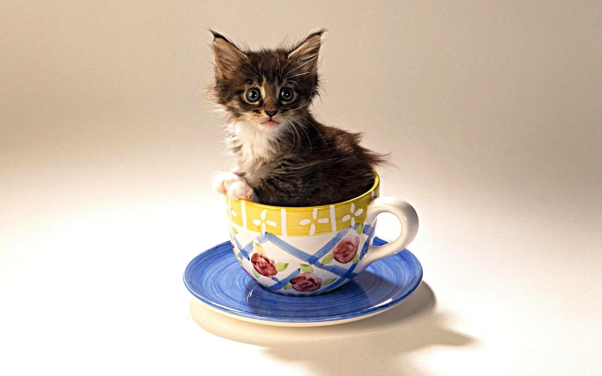 Открытки с котами и добрым утром, гифка денис черышев