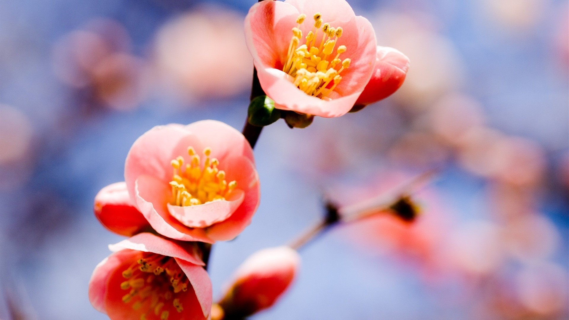 Февраля открытка, картинки для рабочего стола природа весна на весь экран