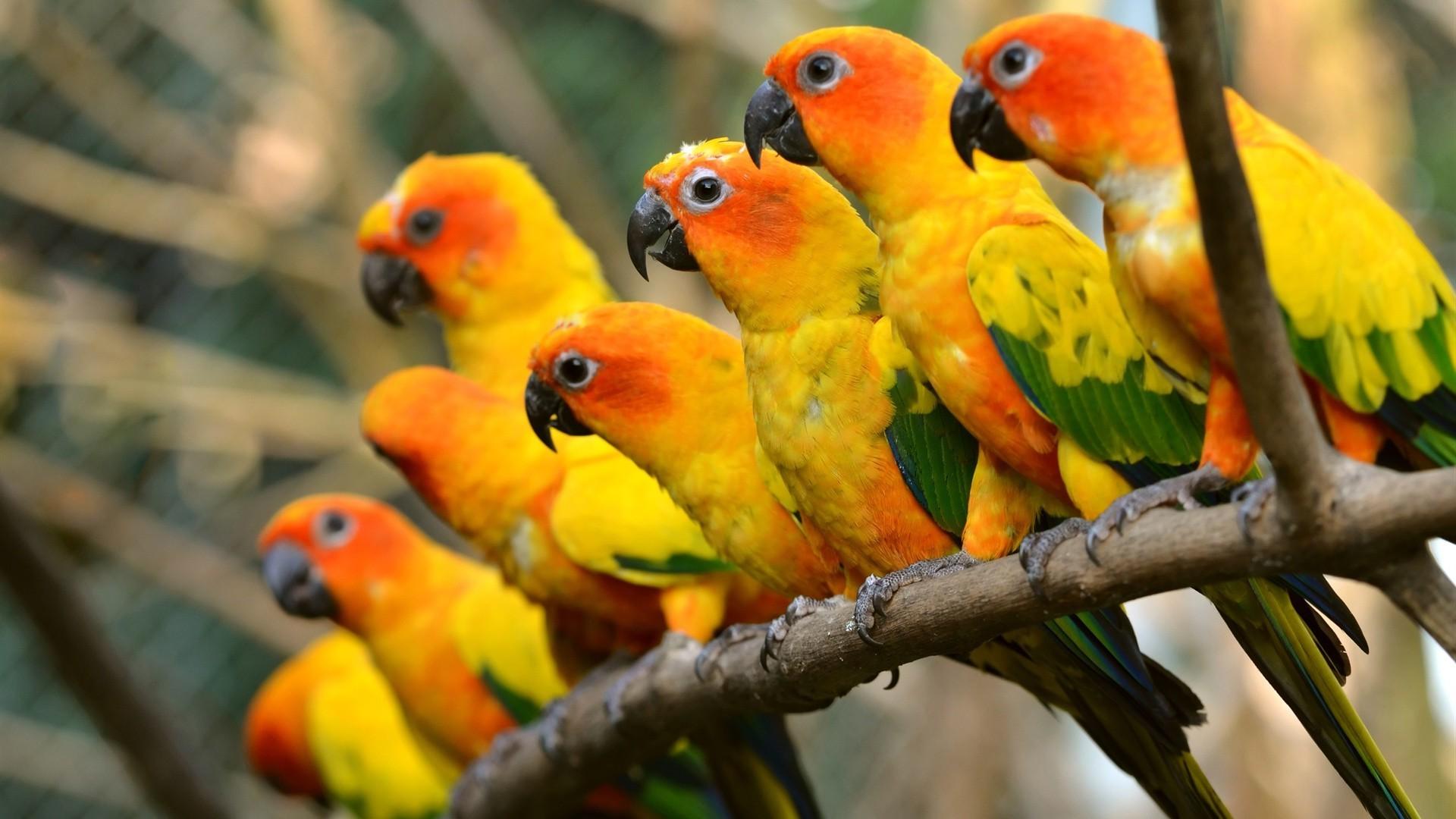 подписана картинки экзотических птиц на рабочий стол сотрудничаем