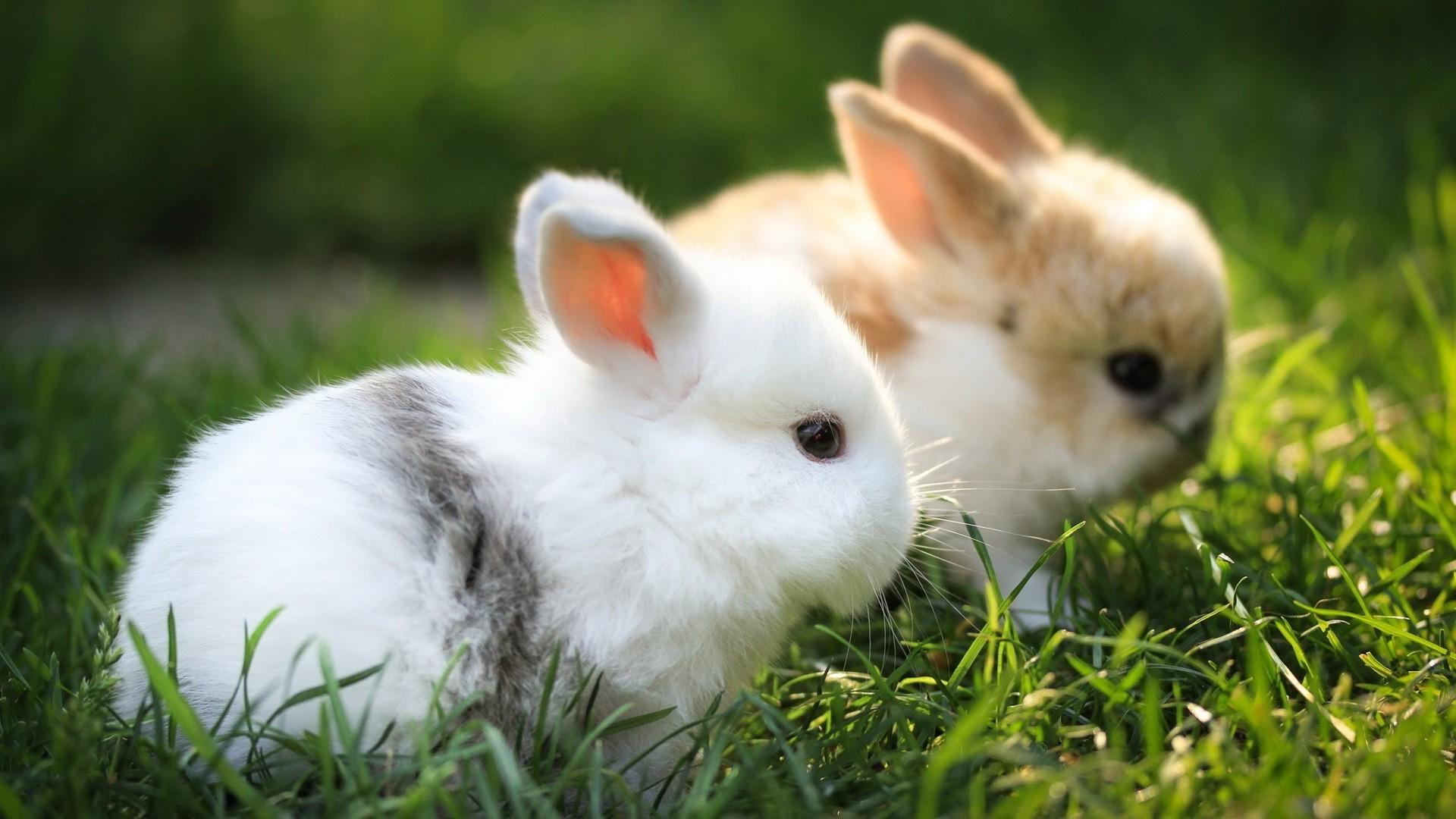 Обои Кролики, Rabbit, осень, листва. Животные foto 10