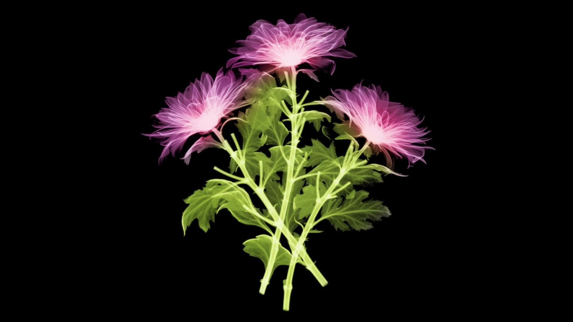 Фото цветы на черном фоне