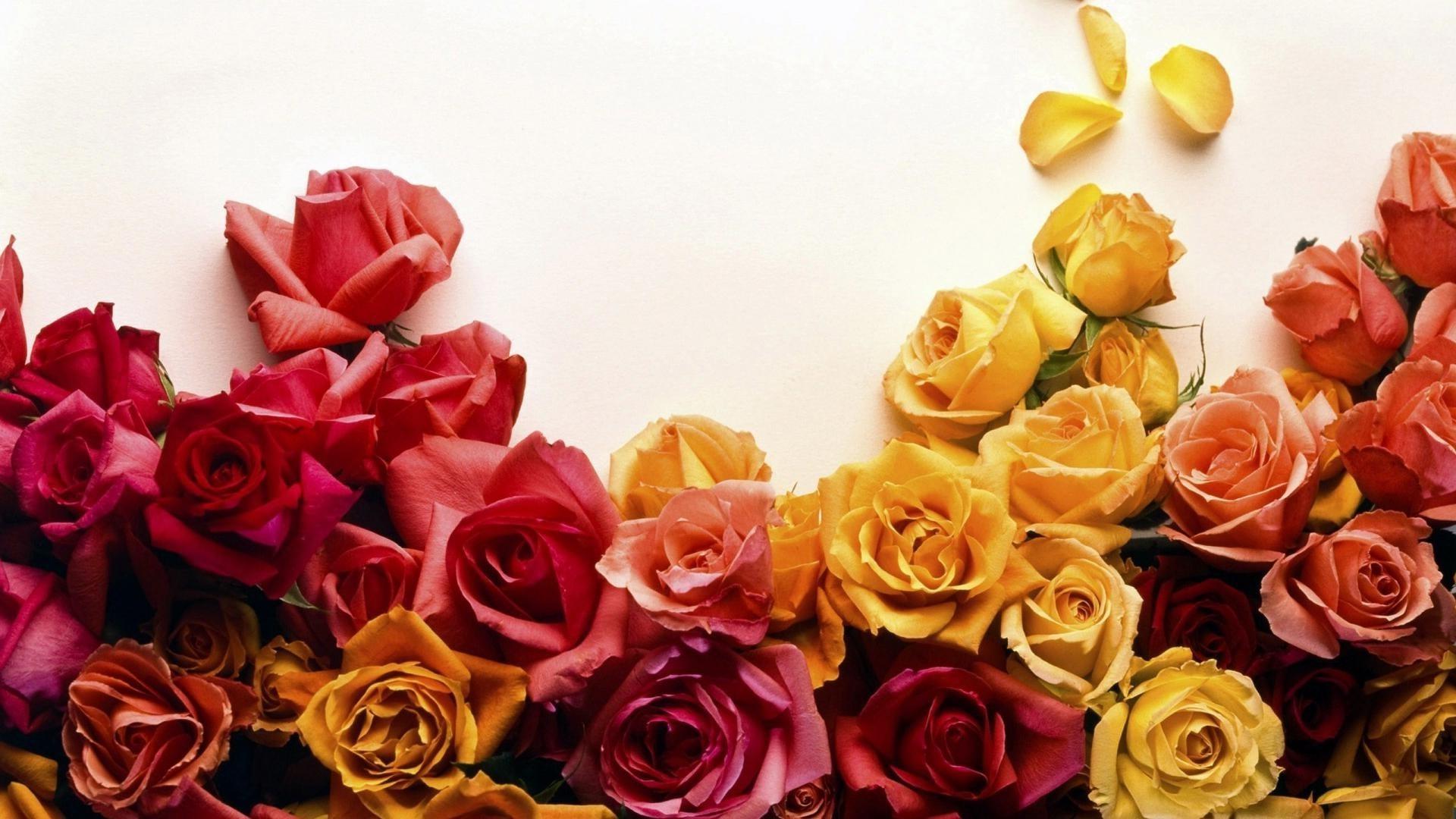 Россыпь цветов  № 2267624 без смс