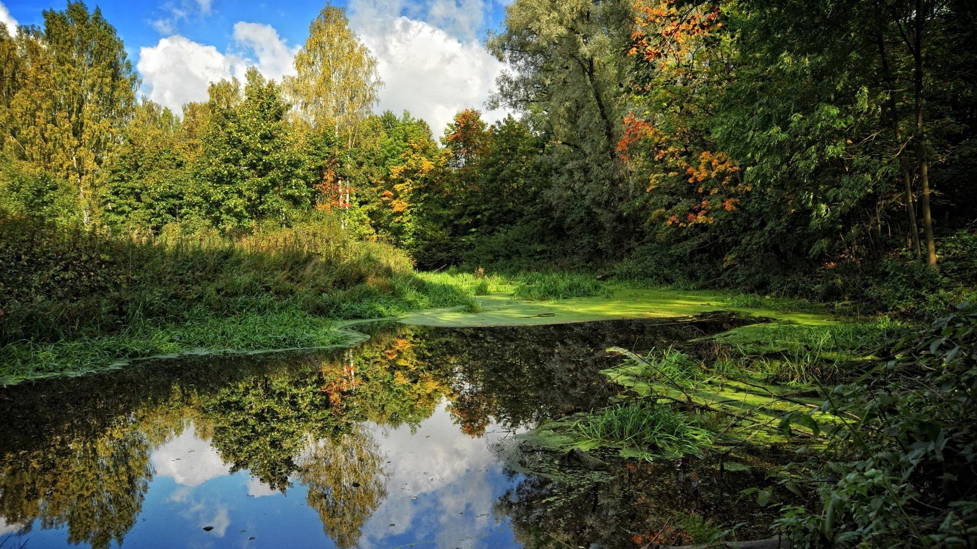 Речка в лесу без смс