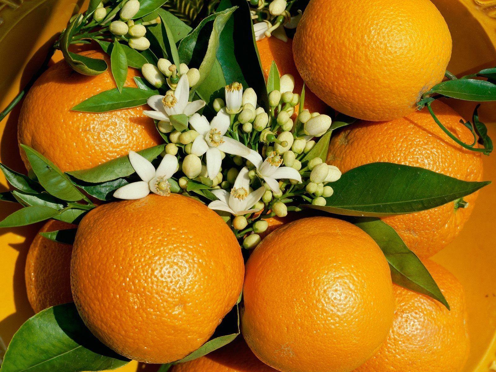 красивые картинки на рабочий стол апельсин нас женятся трэшом