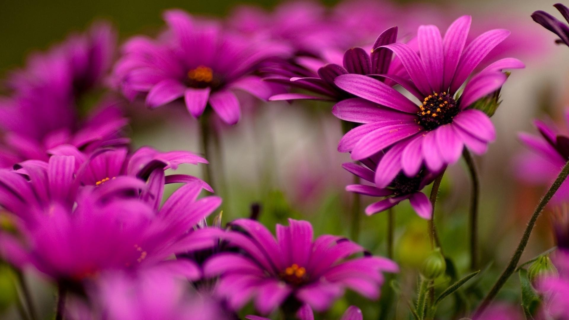 Фото с цветами для фейсбука