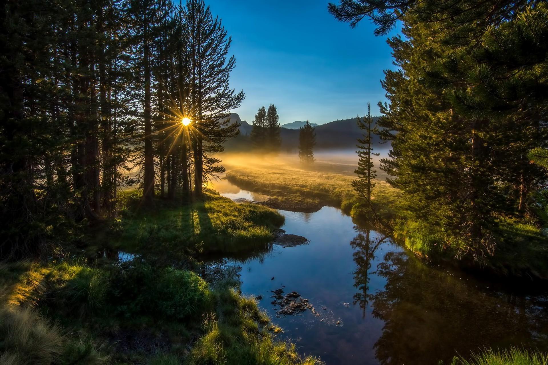 Рассвет в лесу фото