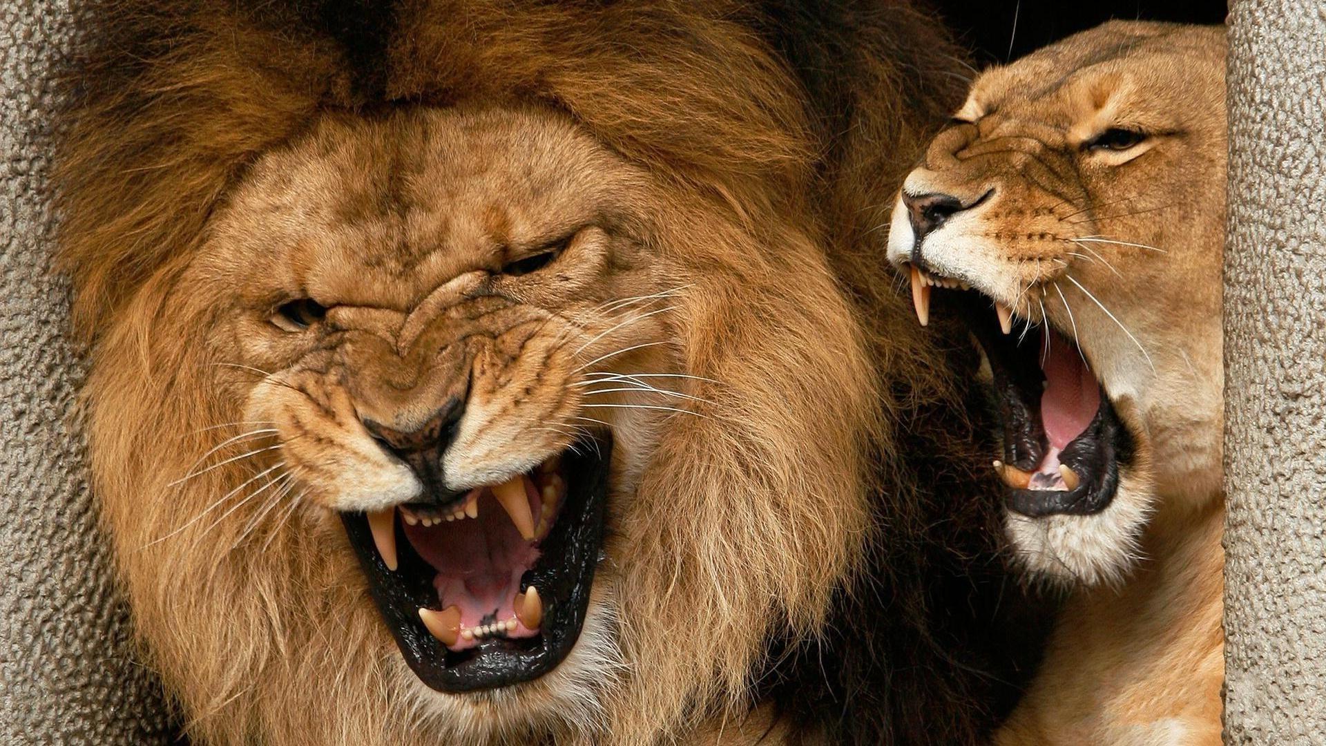 его дети, из-за чего карла льва назвали львом кто очень