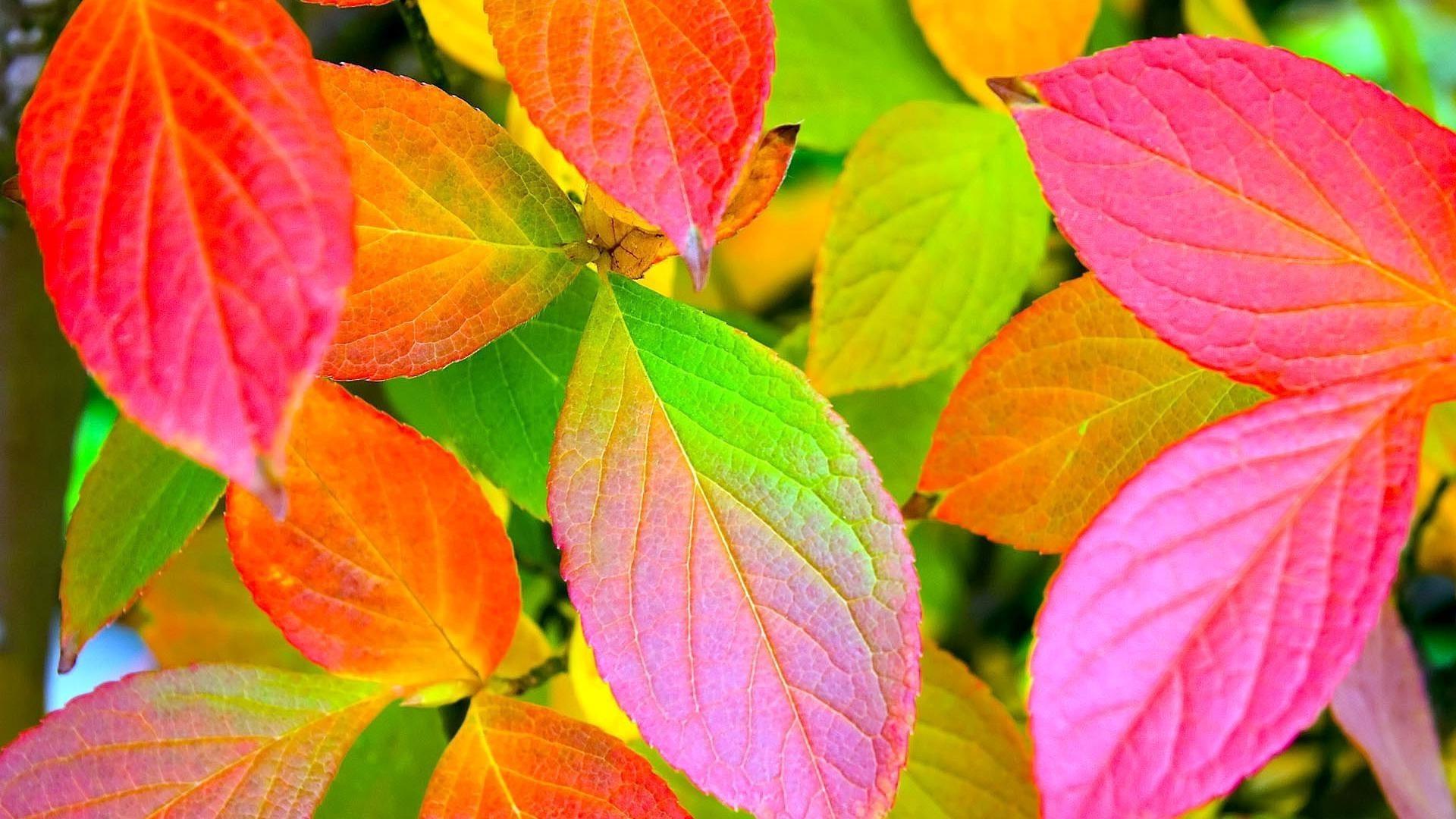 лист листья осень в хорошем качестве
