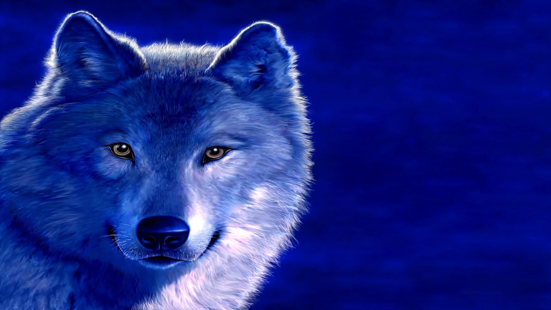 Обои волк животные для рабочего стола