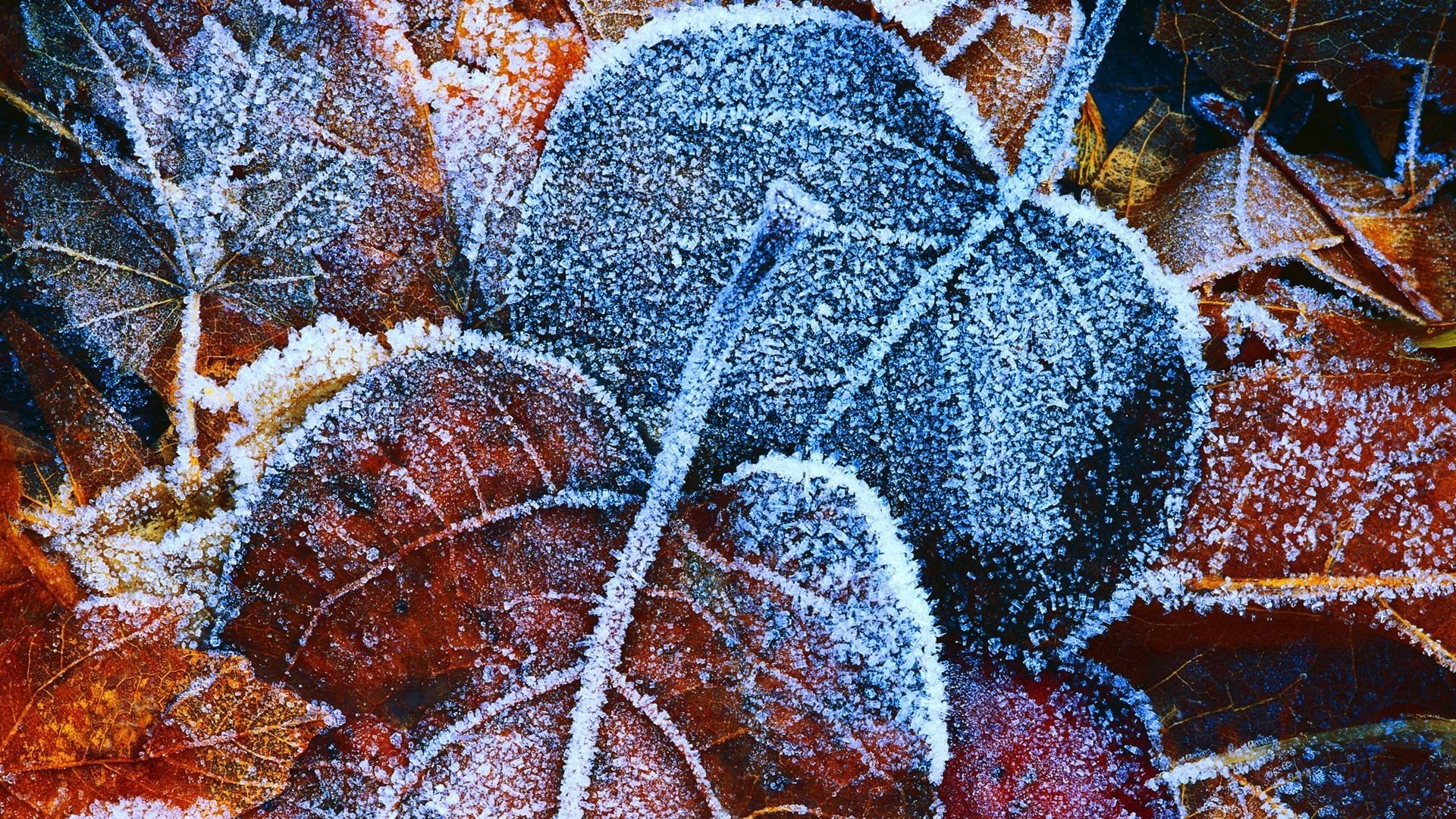 листья изморозь скачать
