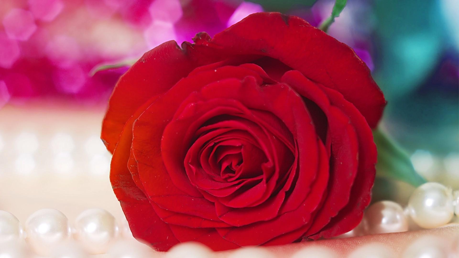 Алая роза загрузить