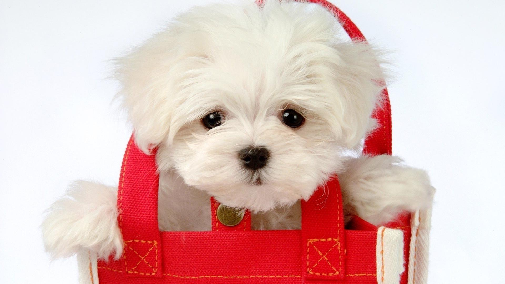 собака пакет сумка  № 1143289 загрузить