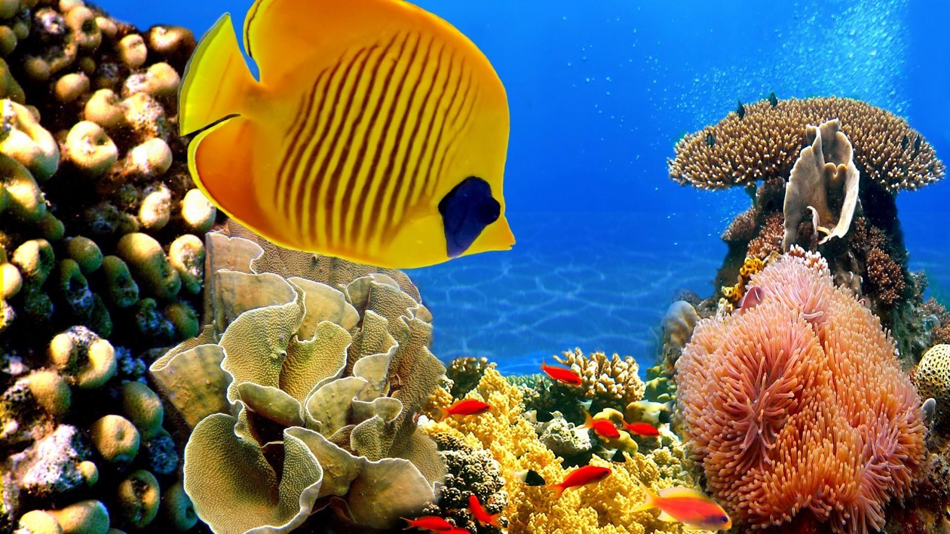 картинки с рыбами в хорошем качестве часто проводит своё