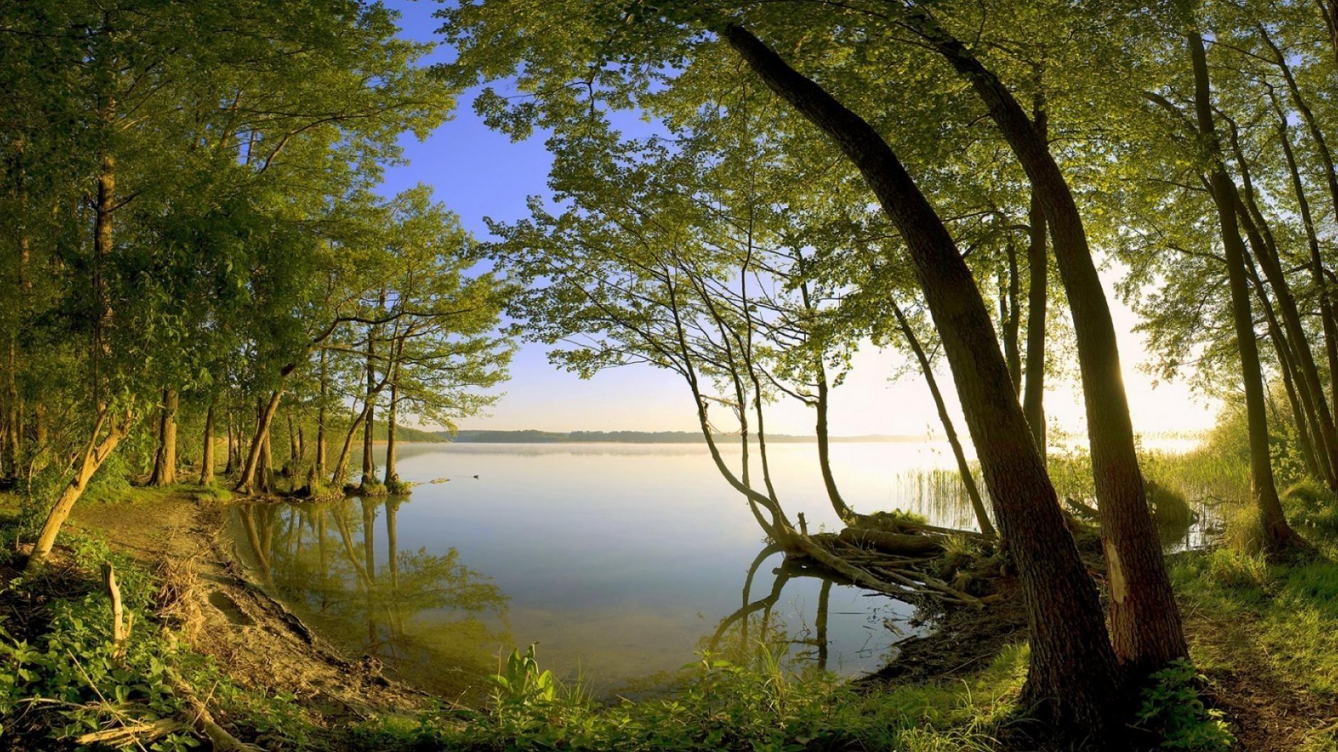 Деревья река вода солнце анонимно