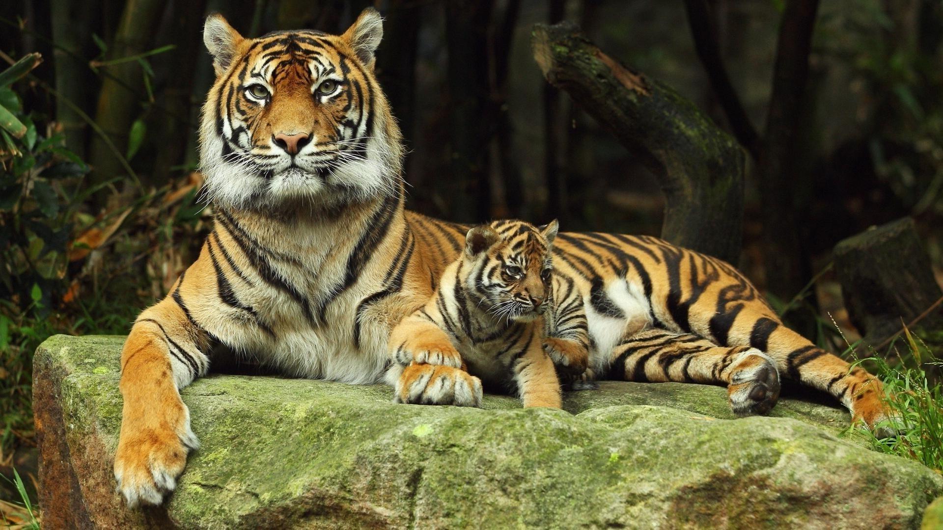 Хинганский заповедник история обитатели флора и фауна