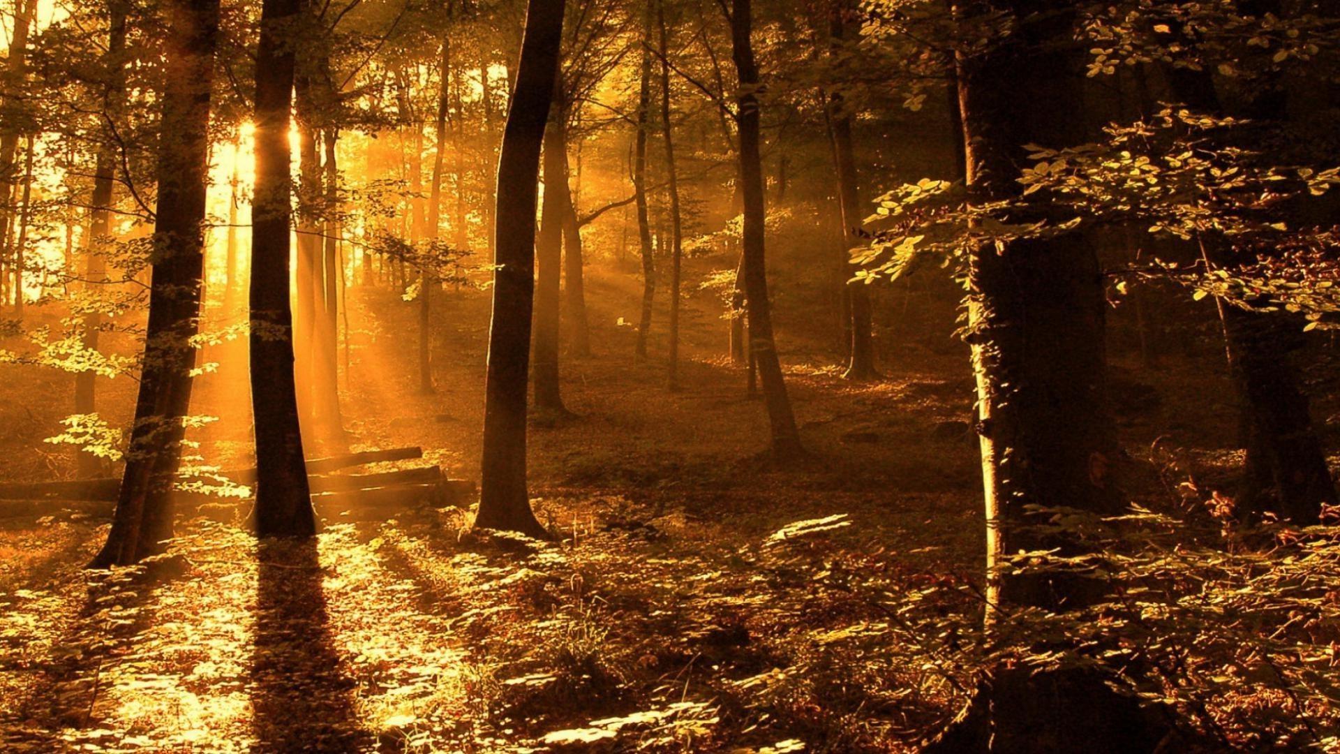 солнце лес листва осень анонимно