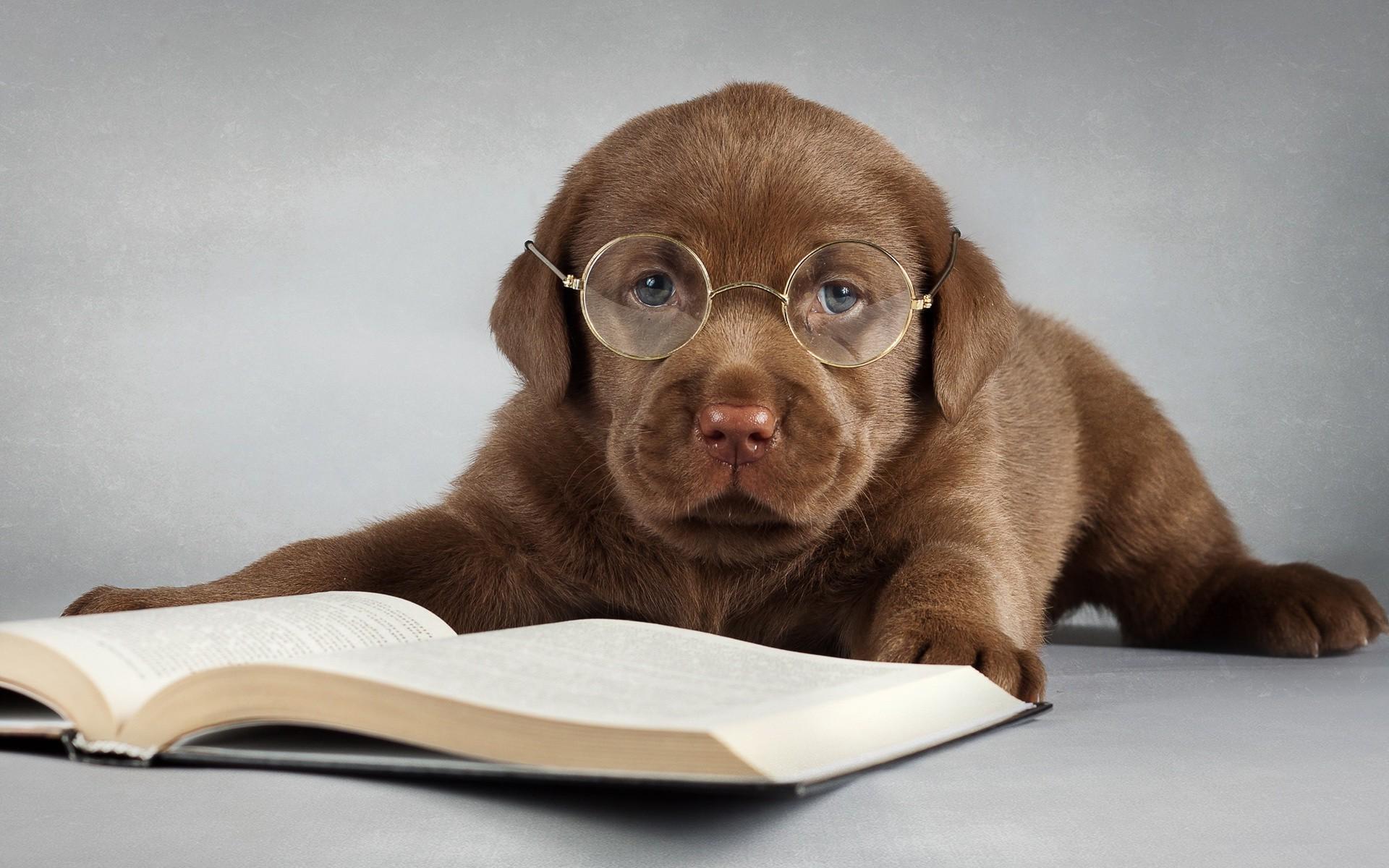 микседема развивается обои с прикольными собаками геометрические