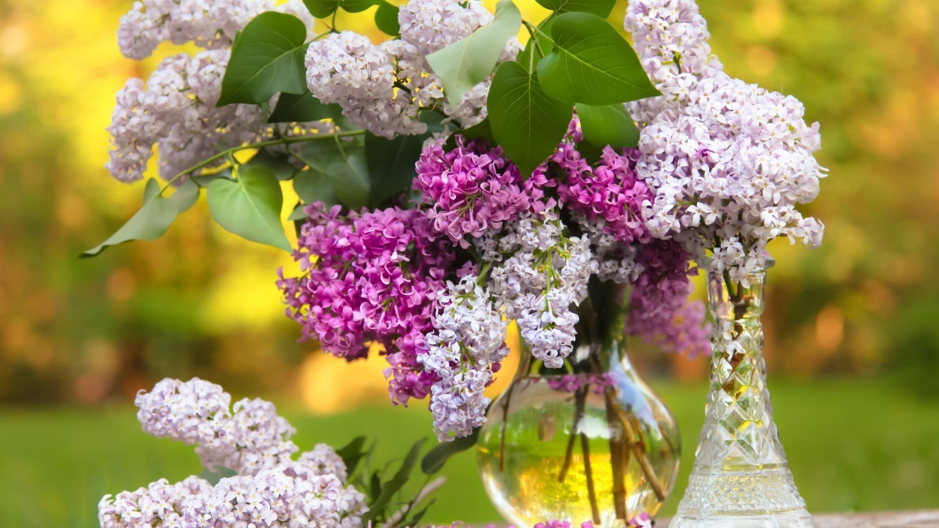природа цветы ваза  № 1734293 бесплатно