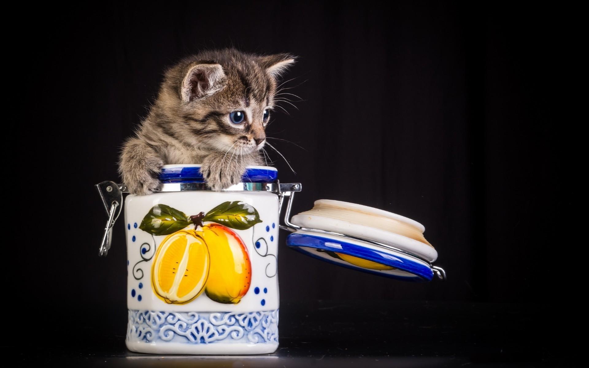 живая открытка кошка в банке кажется, что