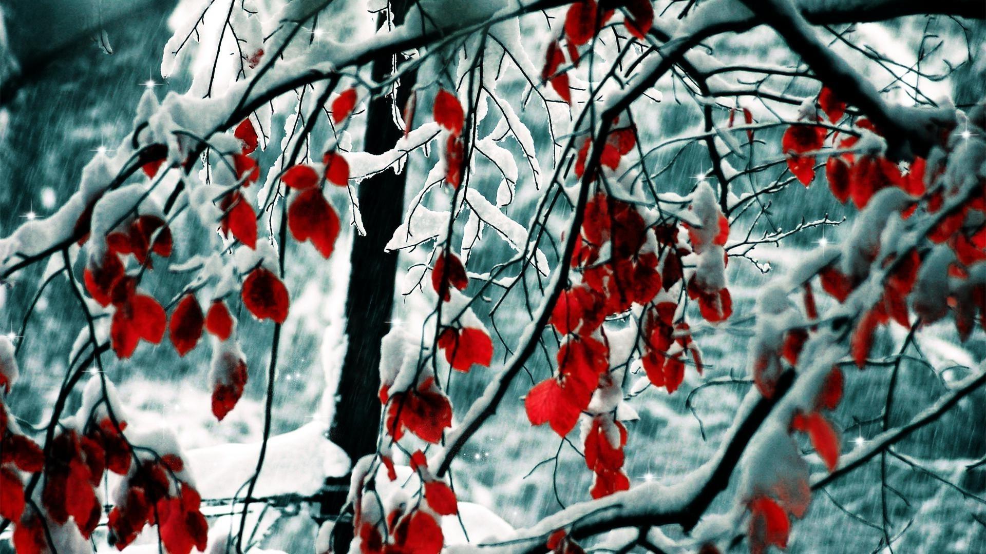 обои на рабочий стол природа осень и зима цветы № 230091  скачать