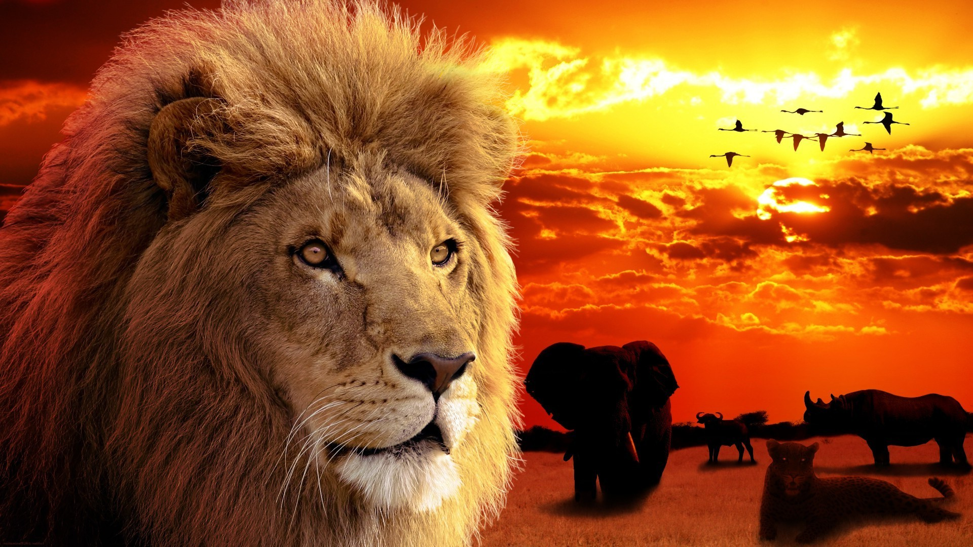 Обои для рабочего стола львы и львицы