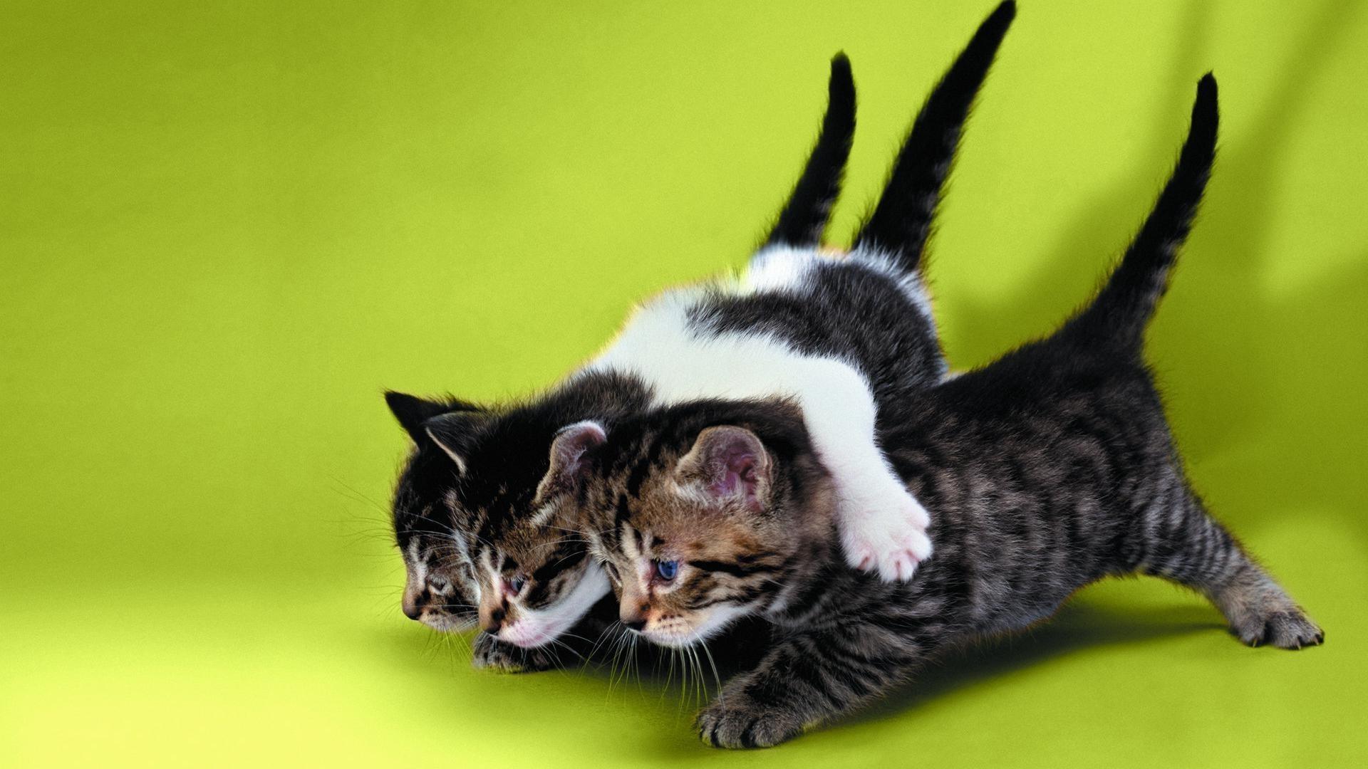 обои для рабочего стола забавных кошек № 606122  скачать