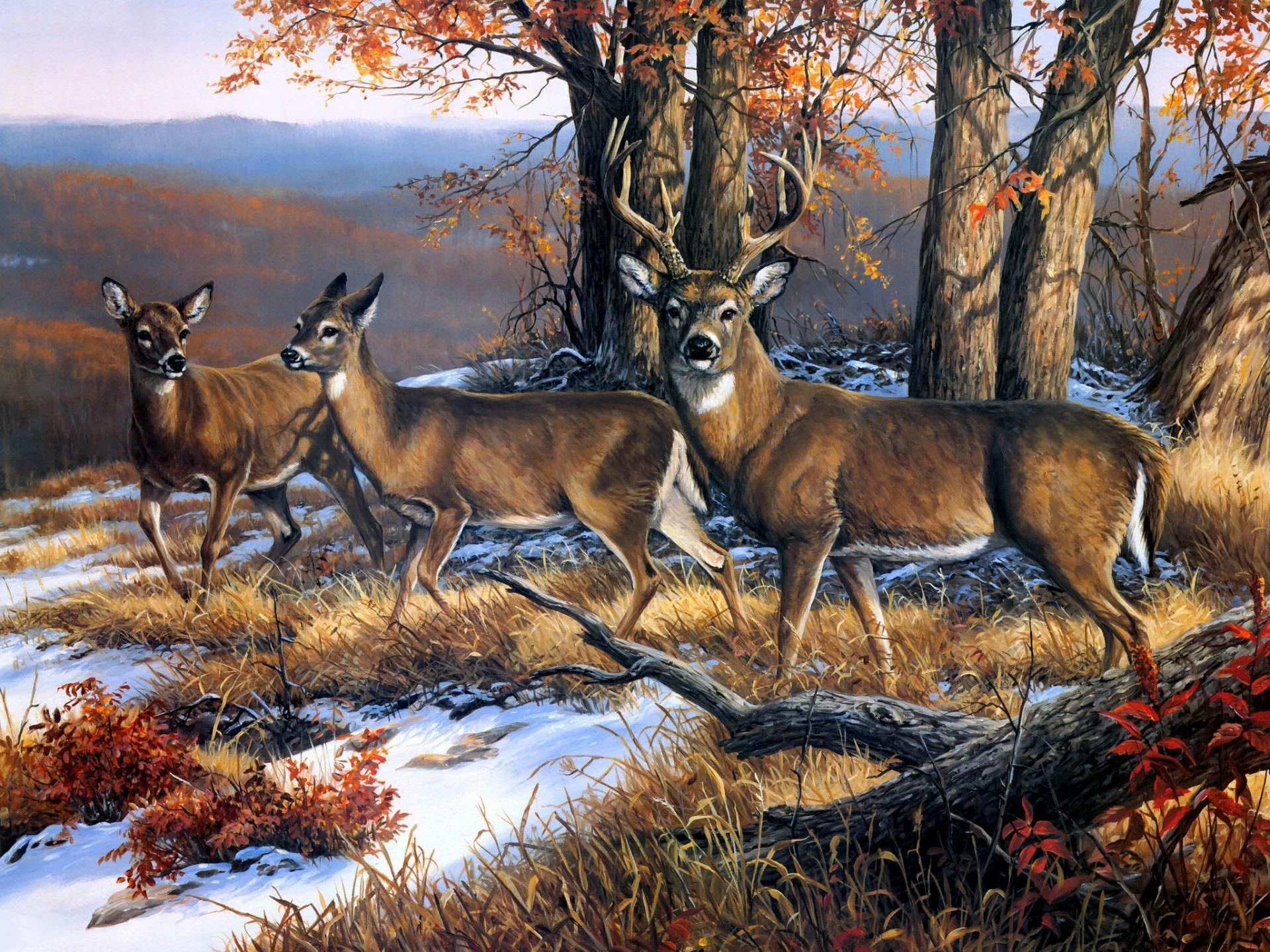 Открытки о лесе, самодельные открытки день