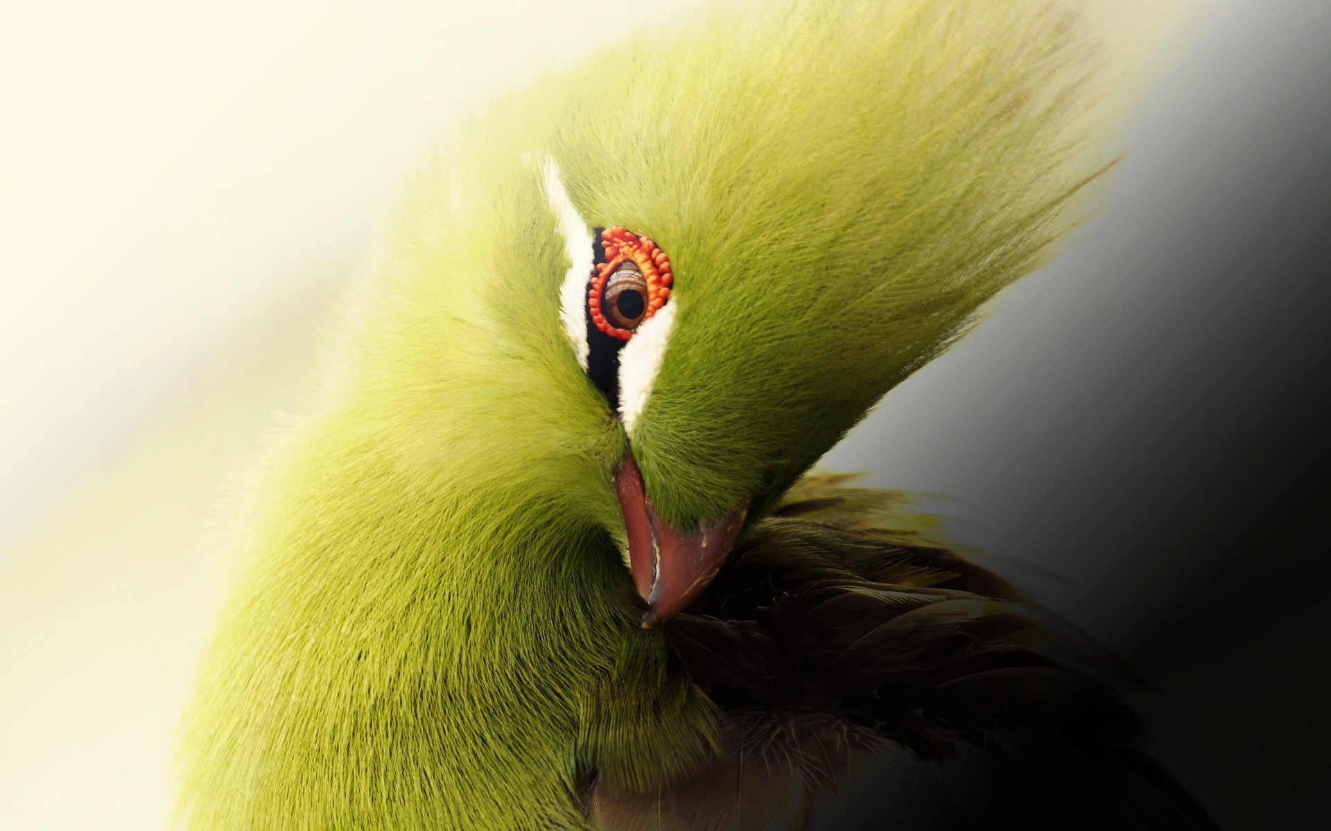 چسب پرنده پرنده.